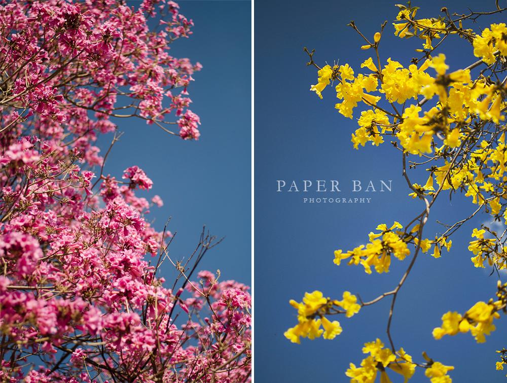 PaperBanPhotography_LosAngelesPhotographer_Spring_03