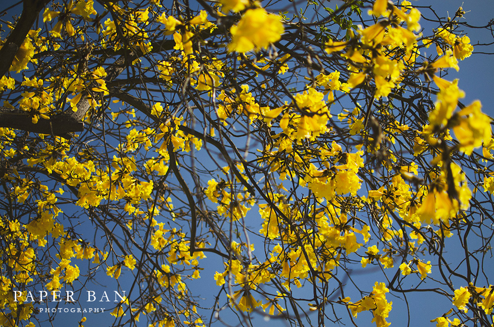 PaperBanPhotography_LosAngelesPhotographer_Spring_04